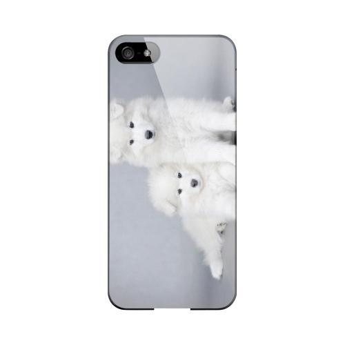 Samoyed Puppies Impact Resistant Geeks Designer Line Slim Hard Case for Apple iPhone 5/5S